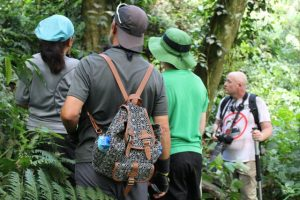 birding-in-bwindi-forest