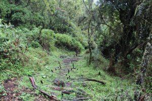 birding-mgahinga-gorilla-national-park