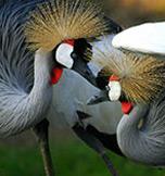 Birding Safari's