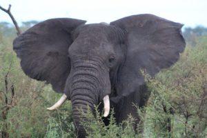 elephants-queen-elizabeth-uganda