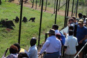 feeding-chimps-ngamba-island