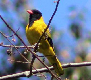 Birds of Bwindi Impenetrable National Park
