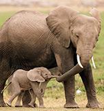 Wildlife Safari's