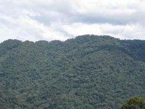 bwindi-forest-uganda
