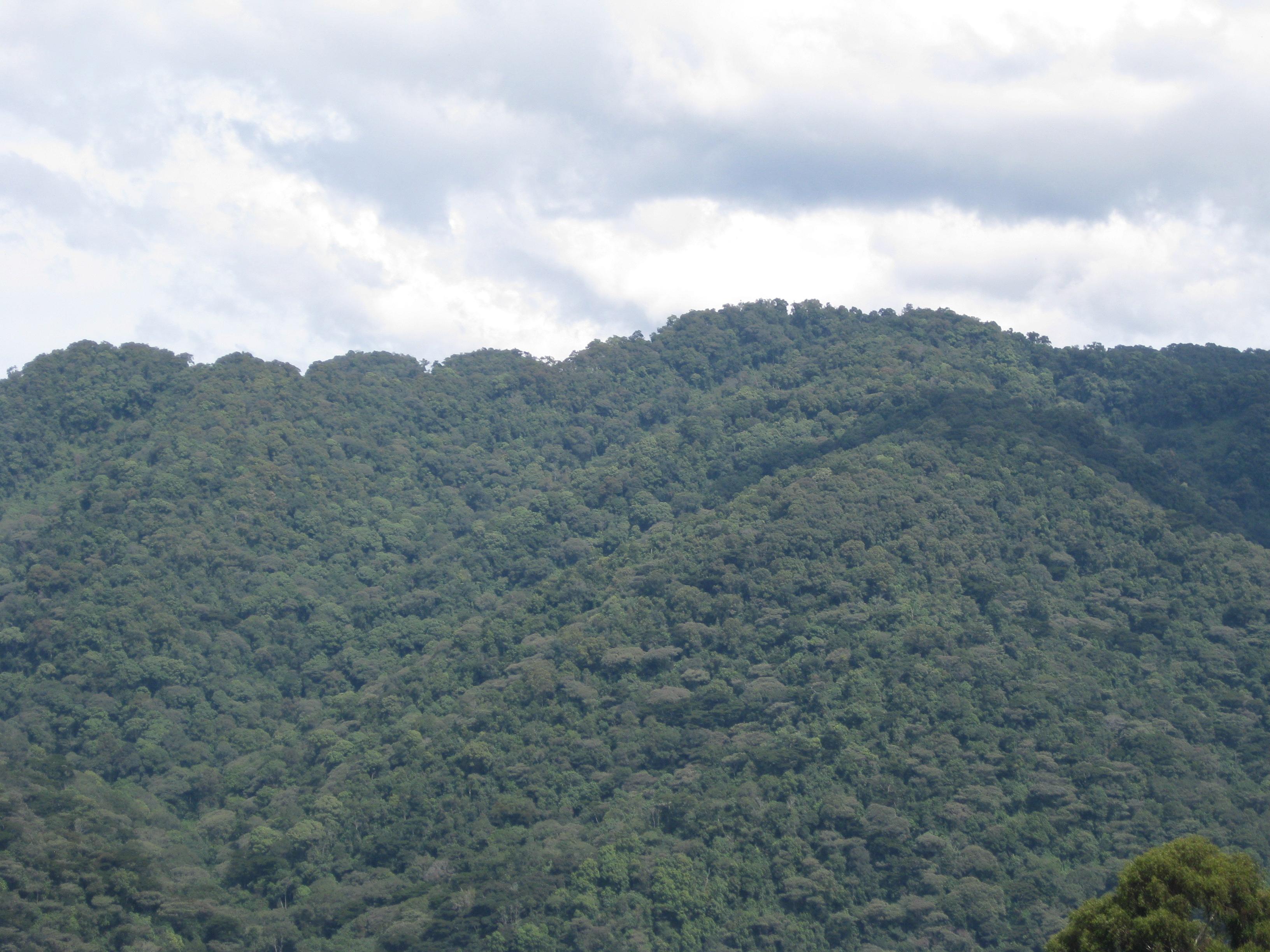 3 days Uganda Gorilla Trekking Safari in Bwindi National Park