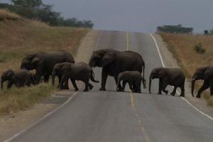 elephants-queen-elizabeth-park