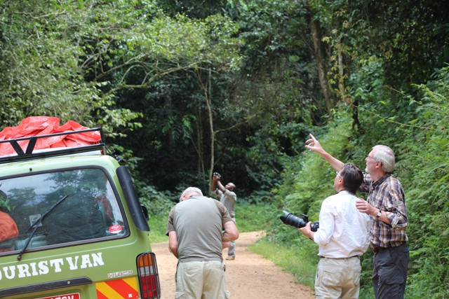 15 Days Uganda Forest Birding Safari
