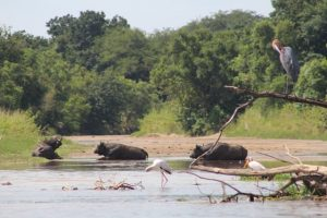 birds-and-animals-murchison