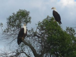 eagles-lake-mburo