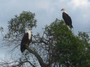 eagles-lake-mburo
