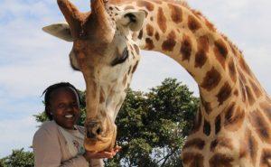 giraffe-in-uganda