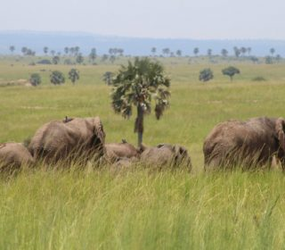 elephants in Akagera National Park