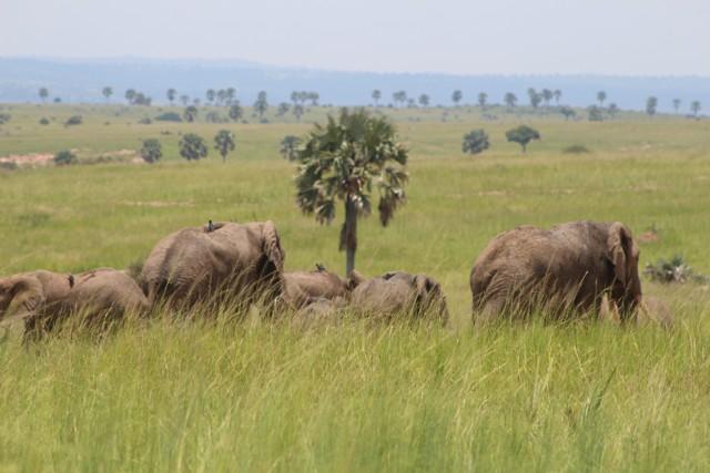 8 Days Rwanda Wildlife Safari