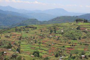 hills-bwindi