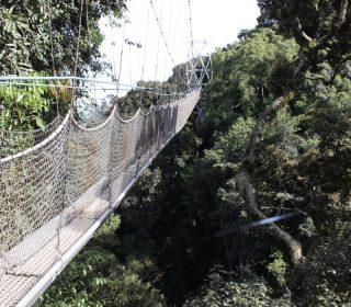 Canopy walk in Rwanda