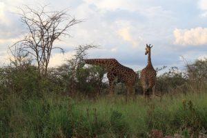 akagera park rwanda