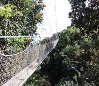 canopy walkway nyungwe forest