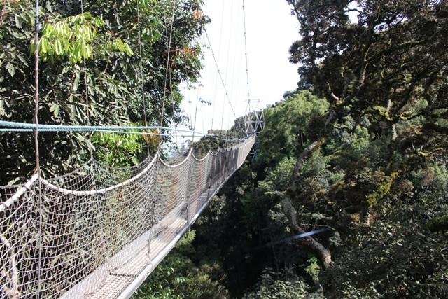 2 Days Rwanda Chimpanzee Trekking Safari