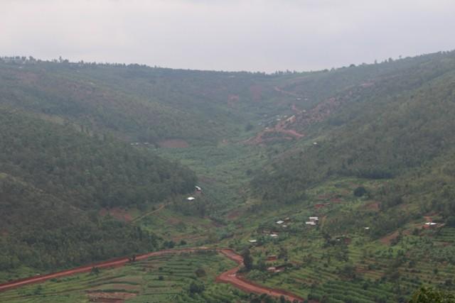 1 Day Rwanda Gorilla trek Safari