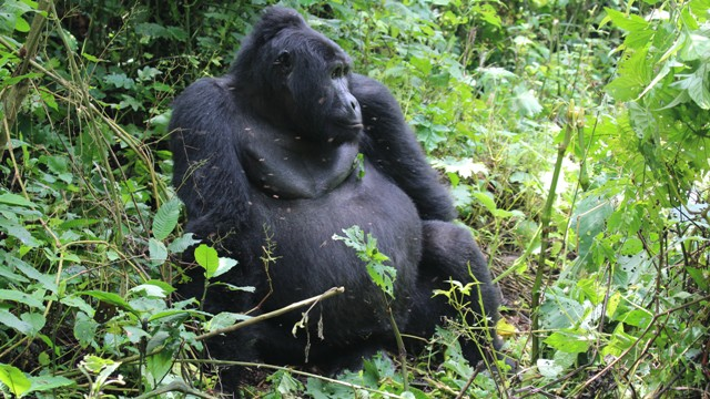 6 days Uganda Gorilla and Wildlife Safari