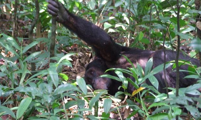 6 Days Rwanda Primates Safari