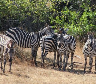 2 Days Akagera National Park Wildlife Safari