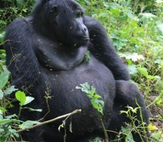 Top Things to Do and See in Volcanoes National Park – Rwanda