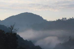birding-forest