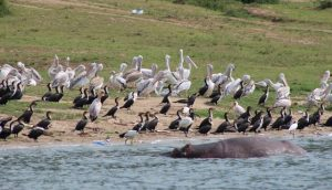 birds-and-wildlife-kazinga-channel