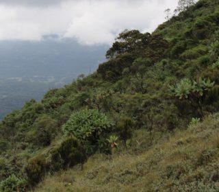 Mt. Bisoke hike