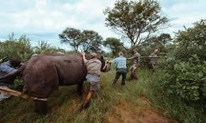 rhinos-akagera-national-park
