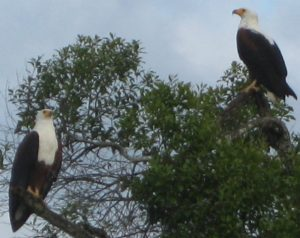 birding-lake-mburo-park