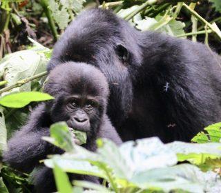 3 Day Uganda Gorilla Trekking Safari from Kigali, Rwanda
