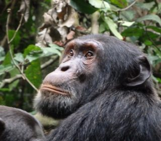 Uganda's Big Seven