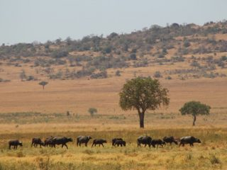 Why you should visit Kidepo valley national park