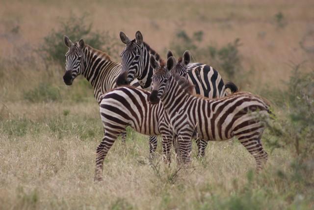 20 Days Exploring Uganda Safari