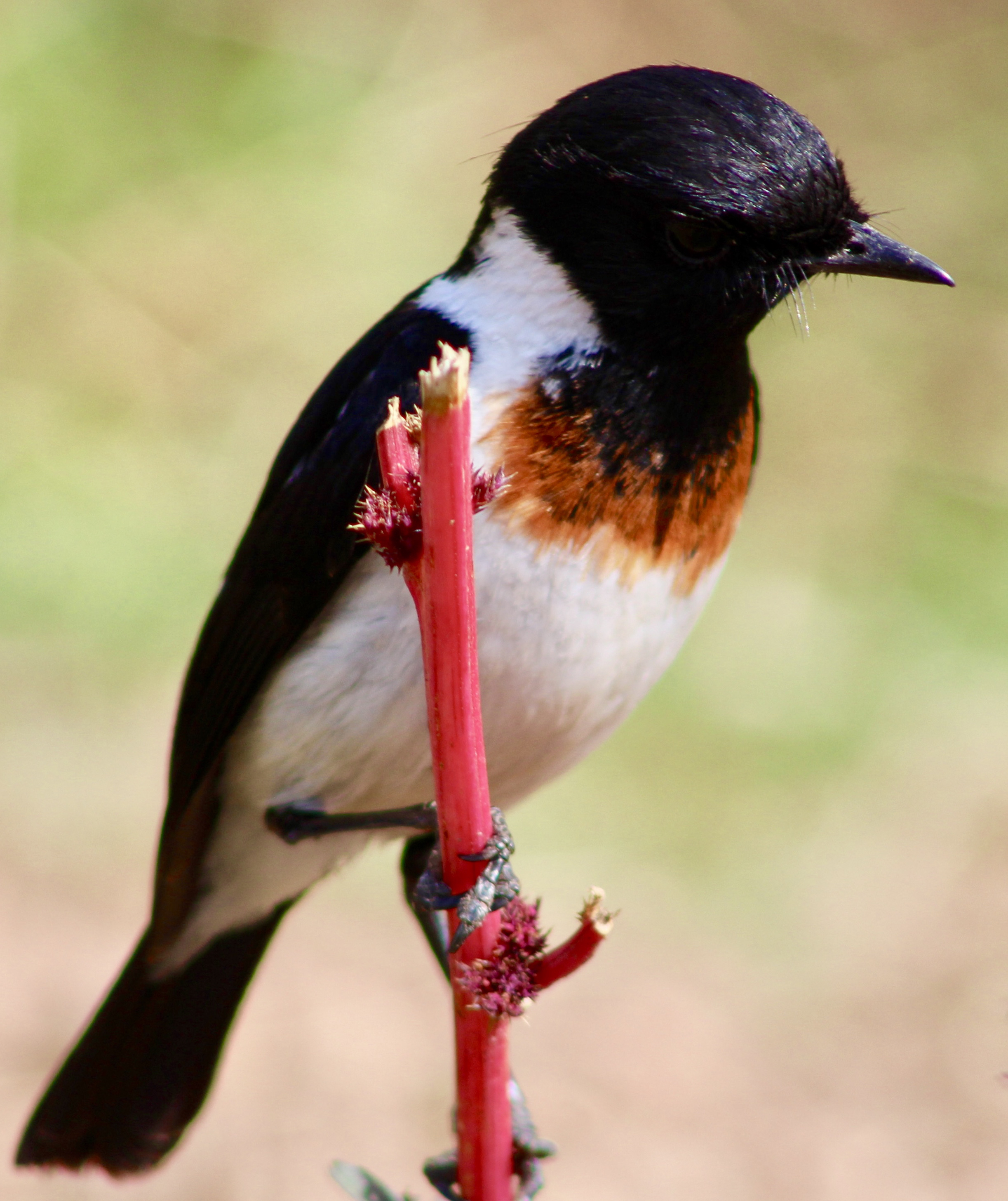 Kagera Safaris has made it onto the Ethical Bird Tours List 2018