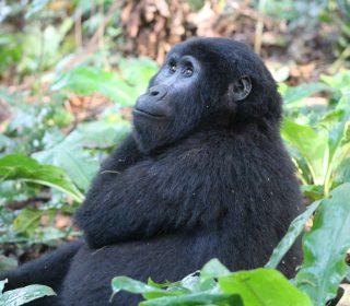 International Accolades to Uganda