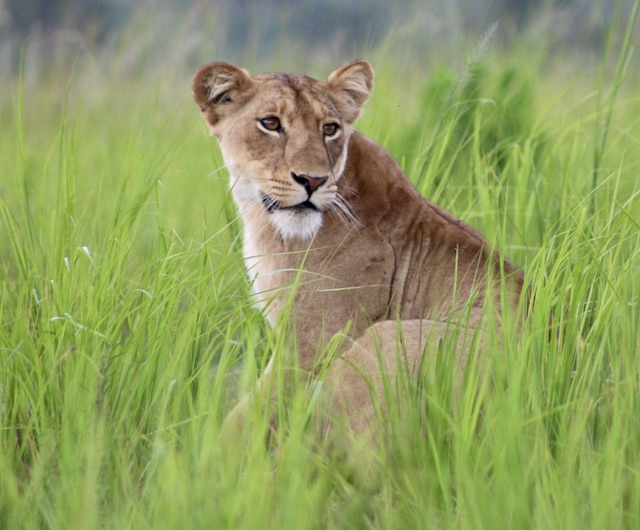 5 Facts about Lions