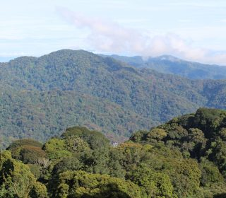 Top 5 things to do at Nyungwe Forest National Park