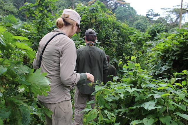 Is it Safe to Visit Bwindi Impenetrable National Park?