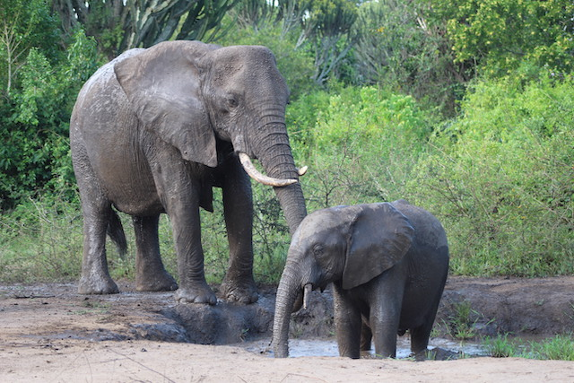 Five facts about Elephants