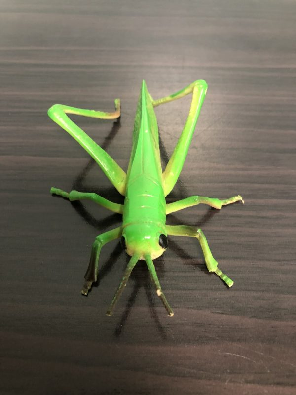 Have you thought of snacking on grasshoppers (Nsenene) in Uganda