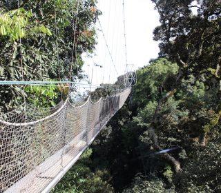 10 Days Best of Rwanda Safari