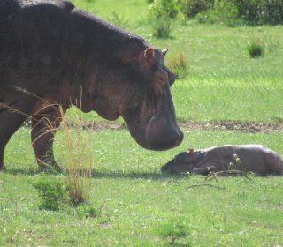 12 Days Uganda Primates and Wildlife Safari