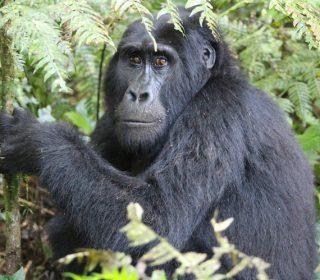 6 Days Rwanda Wildlife and Gorilla Safari